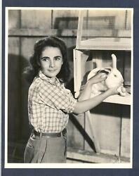 Gorgeous Young Elizabeth Taylor - Exc- Cond. 1944 Photo By C S Bull - True Icon