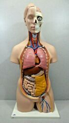 3b Scientific Human Torso Model With Removable Parts And Organs