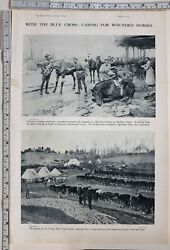 1915 India Ww1 Print Blue Cross Caring For Wounded Horses Veterinary Doctors