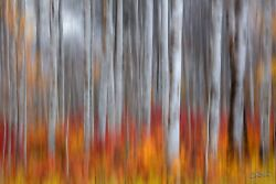 Aaron Reed's Brushed Limited Edition Fujiflex Acrylic Fine Art Print 60 In