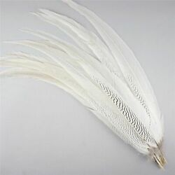 Natural Silver Pheasant Tail Feathers Crafts Diy Decorations White Long Plume