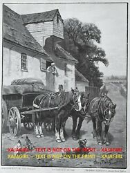 Horse Draft Horses Resting At Mill Unicorn Hitch Large 1890s Antique Print