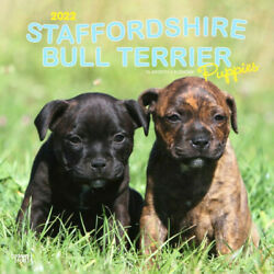 2022 Calendar Staffordshire Bull Terrier Puppies Square Wall by Browntrout