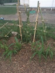 Materials For Diy Bamboo Tomato Cage
