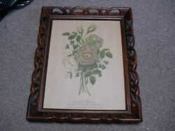 Antique Rose De Provins Print Very Old In An Exquisite Frame Rare Find