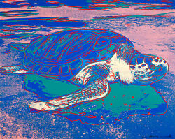 Turtle A1+ by Andy Warhol High Quality Canvas Print Pop Art Wall Art