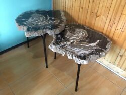 SALE!!! Twins Coffee Table made from Petrified Wood Natural Dark Color