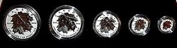 2014 Royal Canadian Mint Silver Maple Leaf Set 5 Coins W Gold Leafs Rare And C.o.a