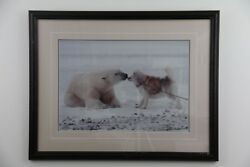 Thomas Mangelsen Signed Sold Out Limited Edition Print Polar Kiss