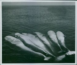 Sea creatures floating a scene from the film quot;Valfångarequot; 1939. 8x10 photo