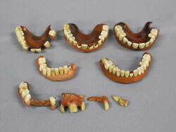 Antique Japanese Denture False Tooth Lot Of 9 / 1900and039 Meiji Collectible F/s