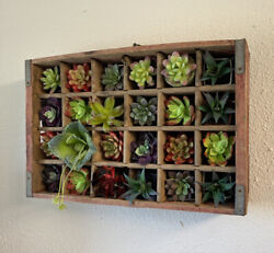 Rc Cola Royal Crown Cola Red Wood Crate Hanging Shelf W/ Plants