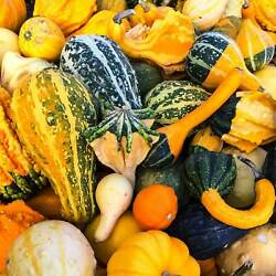 LARGE MIX GROUD 2 g PACKET 60 SEEDS NON GMO HEIRLOOM VEGETABLE GARDENING