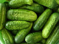 Homemade Pickles Cucumber Seeds NON GMO Heirloom Variety Sizes FREE SHIPPING