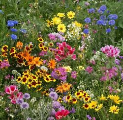 Late Bloomer Wildflower Mix Seeds Autumn Flowers Fall Bloom FREE SHIPPING