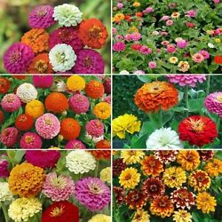 Ultimate Zinnia Flower Seed Mix 6 Mixes In 1 Variety Size Packets Free Ship