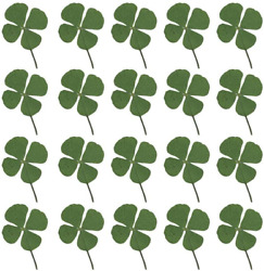 Artibetter 24pcs Natural Pressed Dried Flowers Four-leaf Clover Leaf Plant For