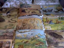 1950s School Prints By Eileen Soper For Enid Blyton Approx 45 Different Copies.