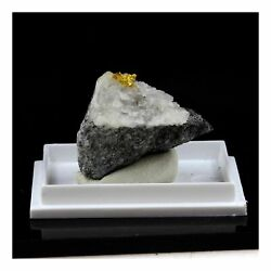 Gold Native. 41.0 Ct. Mine Brusson Val Aosta Italy