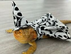 HALLOWEEN COLLECTION Bearded dragon Witch Dress and hat Jack Skelligton