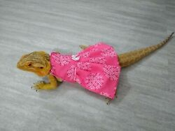 Bearded dragon Pink Dress MADE IN USA