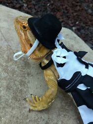 Bearded dragon Cow Dress and hat
