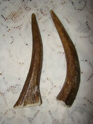 2 All Natural Moose Antler Dog Chew Points From Sheds Cleans Teeth Vet Approved