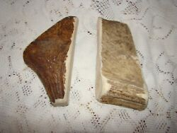 2 All Natural Moose Antler Dog Chews From Sheds Cleans Teeth Vet Approved