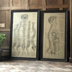 Pair Of Antique Medical Charts, Nervous System And Spine, Anatomical Chart
