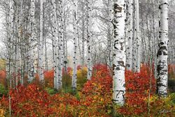Aaron Reedand039s Echoes Of Fall Limited Edition Fuji Acrylic Fine Art Photograph