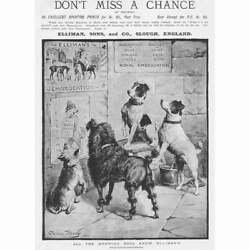 Elliman And Sons Slough, Dogs Looking At Posters - Antique Advertising Print 1892