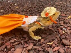 Bearded dragon Dress and hat MADE IN USA