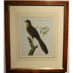 Antique 18th Original Cuckoo Engraving Paper Painting Signed Martinet