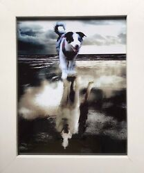 Border Collie Puppy To Adult Digital Photo Print