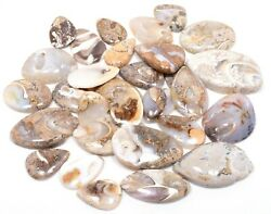 Natural Fossil Snail Mix Cabochon Wholesale Lot Gemstone S03