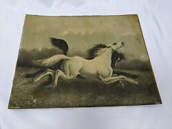 Rare Antique 1900 Wild Horses Lithograph Print By Jos. Hoover And Son Philadelphia