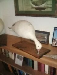 Vintage Goose Decoy Canvas Hand Made. Maker. And Circa Unknown Looking For Info
