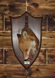 Very Rare Quality Peter Spicer Hanging Taxidermy Fox Death Mask