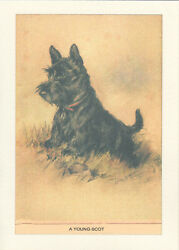 Scottish Terrier Puppy Dog by Lucy Dawson 1930's LARGE New Blank Note Cards