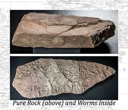 Authentic And Original Prehistoric South American Rock Samples Extremely Rare