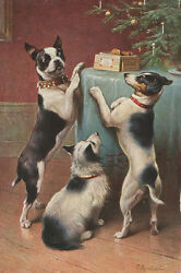 Antique Boston Terrier Dog & Pals Survey Gifts  LARGE New Christmas Note Cards