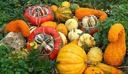 25 gourd seeds large mix gourd seeds