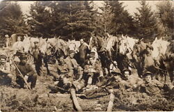 Antique Logging Crew With Horse Teams And Tools Rppc