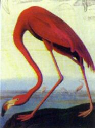 Vintage Pink Flamingo Painting Art Print Poster 8x10 Inches