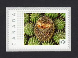Lq. Hedgehog On Cactus = Picture Postage Stamp Mnh Canada 2015 [p15/01sn20]