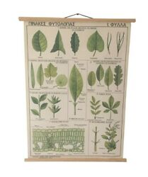 Different Type Of Leaves Pull Down Chart Vintage Botanical Science School Map