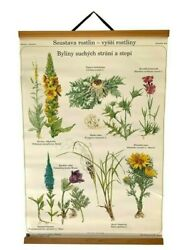 Awesome Herbs Botanical School Chart Daisy Thistle Herbs Vintage Pull Down Map