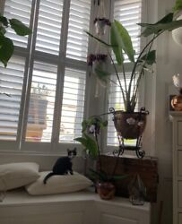 Arts And Crafts Art Nouveau Large Copper Planter Jardiniere Stand With Lid