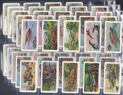 Brooke Bond Canada, Dinosaurs, Set Of 48 Issued In 1971. Excellent Condition.
