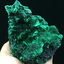 320.5g Natural Green Acicular Malachite Crystal Mineral Specimen/ From Congo